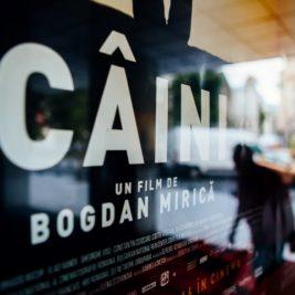 caini_foto-ionut-dobre-small